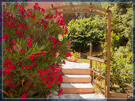 BED AND BREAKFAST LE MAS DU BIJOU BLEU - French Riviera PUGET SUR ARGENS 83480 - B&B Puget sur Argens - Studio and gite for rent
